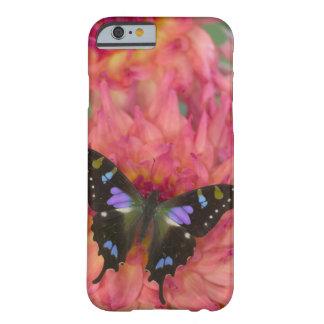 Sammamish Washington fotograferar av fjäril på 5 Barely There iPhone 6 Skal