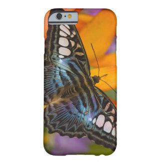 Sammamish Washington tropisk fjäril 24 Barely There iPhone 6 Skal