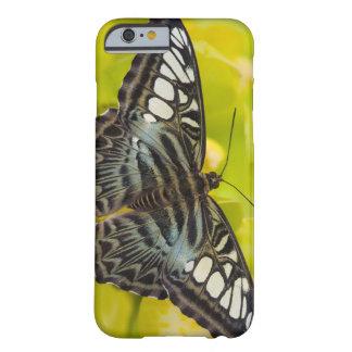 Sammamish Washington tropisk fjäril 38 Barely There iPhone 6 Fodral