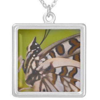 Sammamish Washington. Tropiska fjärilar 23 Silverpläterat Halsband