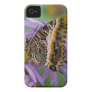 Sammamish Washington tropiska fjärilar 3 iPhone 4 Fodral