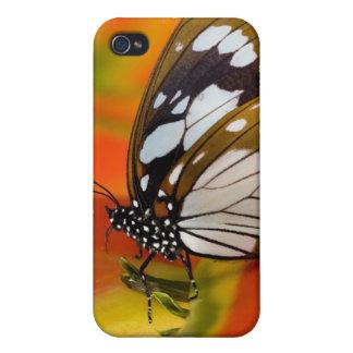 Sammamish Washington. Tropiska fjärilar 42 iPhone 4 Hud