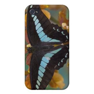 Sammamish Washington. Tropiska fjärilar 52 iPhone 4 Fodral
