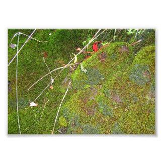 säng av moss fototryck