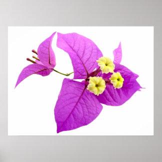 Santa Rita blommor Poster