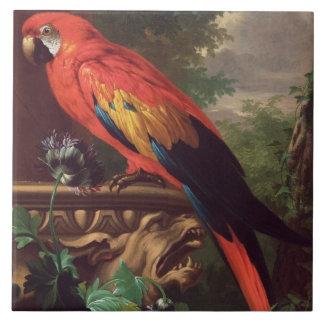 Scharlakansröd Macaw i en landskap (olja på kanfas Kakelplatta