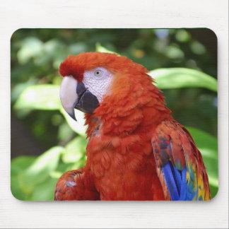 Scharlakansröd Macaw Musmatta