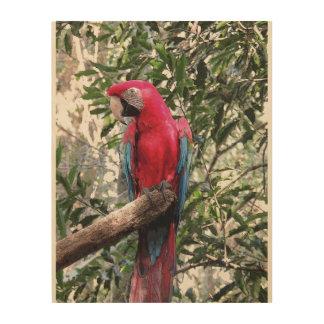 Scharlakansröd Macawfågel Trätavla
