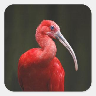 Scharlakansröda Ibis Fyrkantigt Klistermärke
