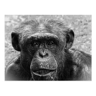 Schimpansansikte, underbart tecken som är vykort