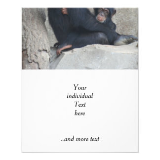 Schimpansmamma och baby  reklamblad 11,5 x 14 cm