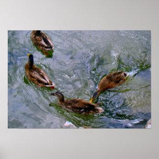 Schweitz Nyon duckar på sjön Affisch