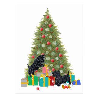Scotties sorterar julgåvorna vykort