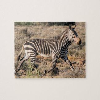 Sebraspring i afrika på Safari i busken Pussel