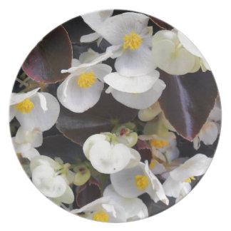 Semperflorens begonia tallrik