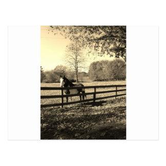 Sepia tonar fotoet av den svartvita hästen vykort