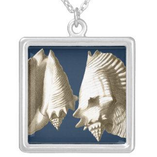 SepiaConchsnäckskal Silverpläterat Halsband