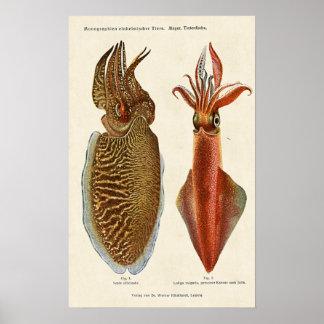 Sepiaundbläckfisk 1913 print
