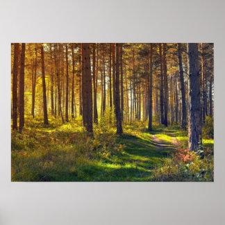 September i skogen. Soluppgång i höstskog Poster