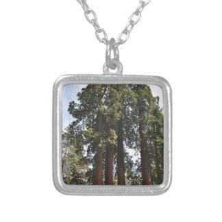 Sequioa nationalpark silverpläterat halsband