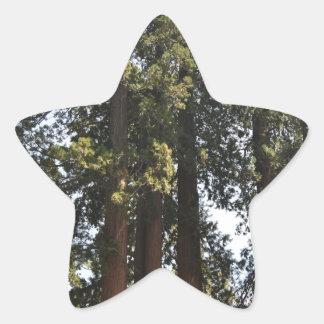 Sequioa nationalpark stjärnformat klistermärke