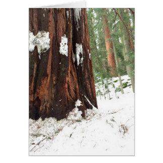 Sequoia i snön hälsningskort
