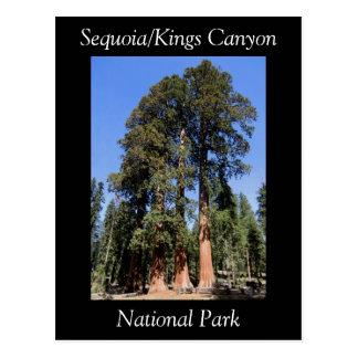 Sequoiaen görar till kung vykort