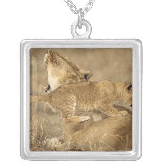 Serengeti nationalpark, Tanzania Silverpläterat Halsband