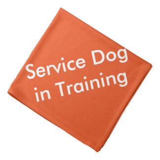 Serva hunden i utbildningsBandana Wrap För Huvud