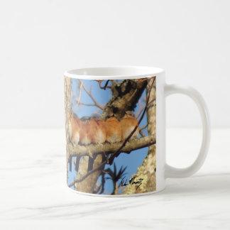 Sex bluebirds som sitter på en trädgren kaffemugg