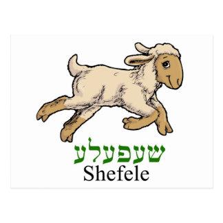 Shefele-lamb i Yiddish Vykort