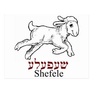 Shefeleh-little lamb vykort