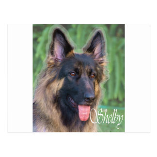 Shelby Vykort