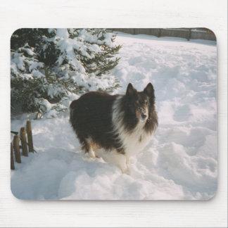 Sheltie i snön musmatta