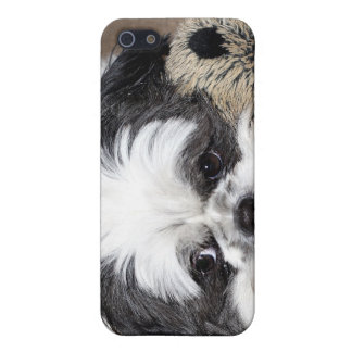 Shih Tzu ansikte iPhone 5 Hud