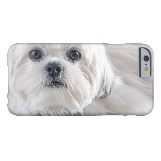 Shih Tzu Barely There iPhone 6 Skal