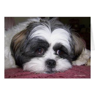 Shih Tzu hund Hälsningskort