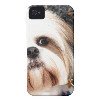 Shih Tzu iPhone 4 Hud