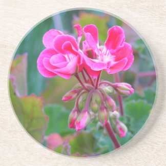 Shock rosa blommar det härliga färgrika trädgårds- glasunderlägg