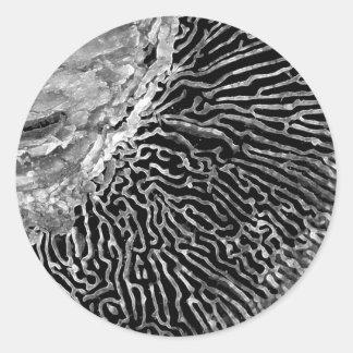 Shroom svamparna 1 runt klistermärke
