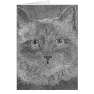 Siamese katt för härliga ögon hälsningskort
