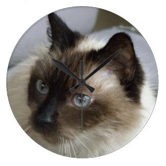 Siamese kattunge tar tid på stor klocka