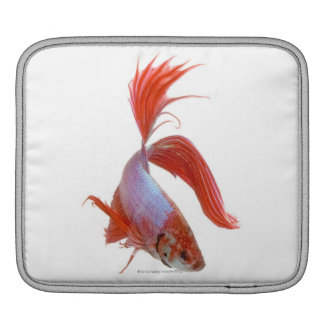 Siamese stridighetfisk (Betta splendens) iPad Sleeve