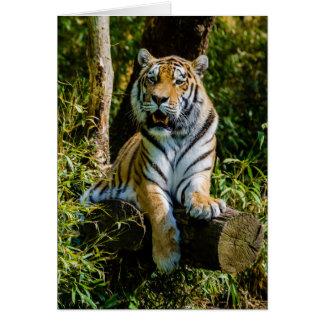 Siberian Panthera Tigris Altaica för tigerAmur Hälsningskort