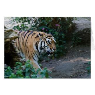 Siberian tiger •, Hälsningkort Hälsningskort