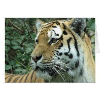 Siberian tiger hälsningskort