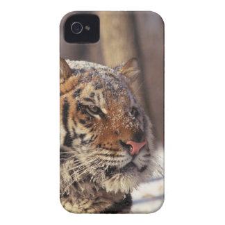Siberian tiger iPhone 4 fodraler