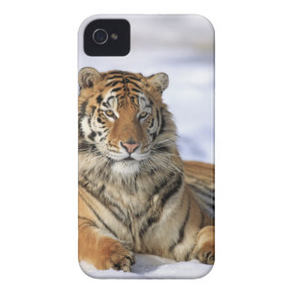 Siberian tiger, Pantheratigris altaica, Asien, Case-Mate iPhone 4 Fodraler