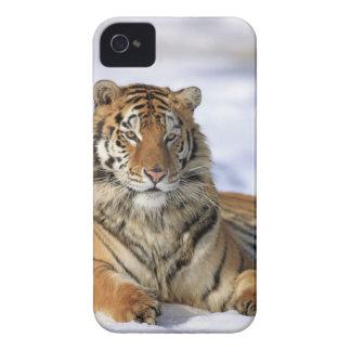 Siberian tiger, Pantheratigris altaica, Asien iPhone 4 Case-Mate Fodral