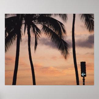 Signalera och palmträdet print